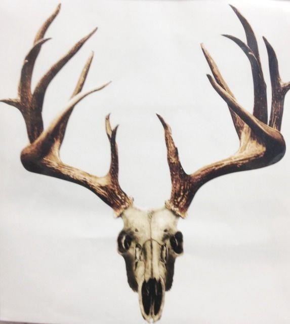 5a57b429dfee1764e6507f721ae504a3  skull moose
