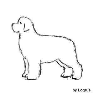 60e3418dcf96166d6b75f03ec2808806  newfoundland dogs cat grooming