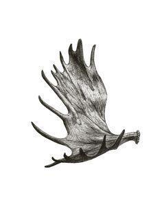 8ccf0109e9c2385f0fe81ad93eaffa4d  moose antlers moose antler tattoo