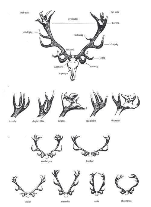 95ecc2223968d09d21c9a49f23d5a030  elk tattoo deer skull tattoo