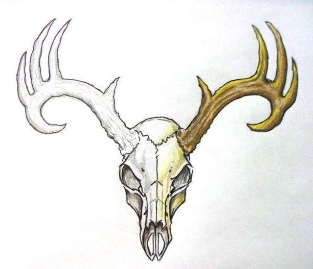 9e65efc4ce22cd204f68d117d2a6653e  deer skull tattoos skull tattoo design