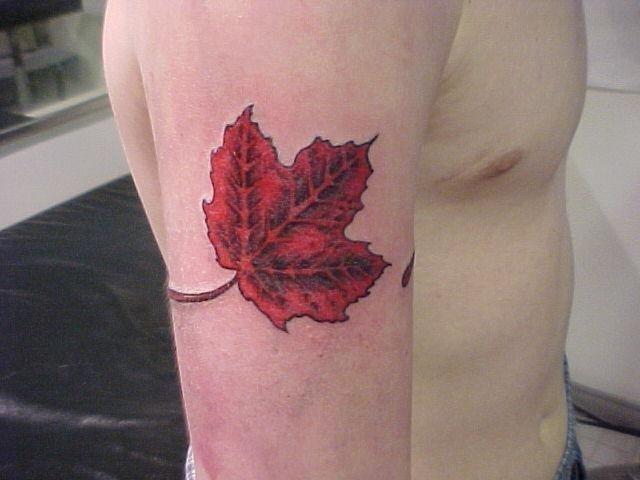 Candian Leaf Tattoo On Bicep