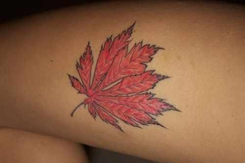 Amazing red maple leaf tattoo