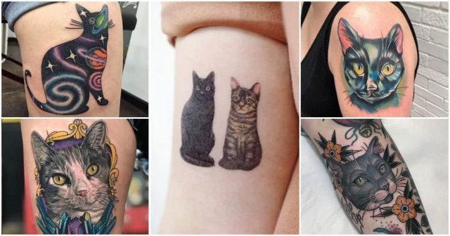 Cattoo image 1200×630