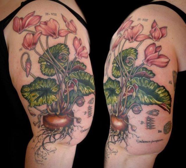 Cyclamen flower tattoo vintage botanical