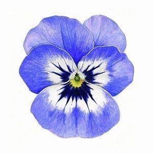 E2b66f212cc8027a34d5d8a0379dd5c2  flower watercolor watercolor painting