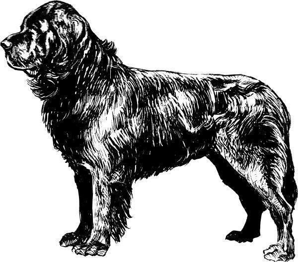 E4aed8aa29ccb47d39c90e3c7c02cd19  tattoo ideas newfoundland dogs