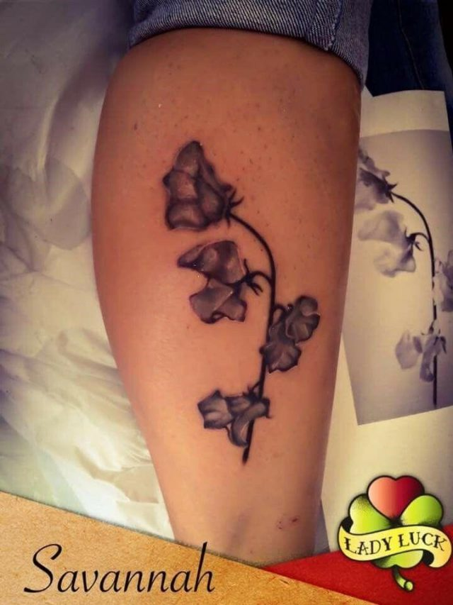 Ede871d7dafa1f9a559e66b318b96dd4  sweet pea flower tattoo sweet pea flowers
