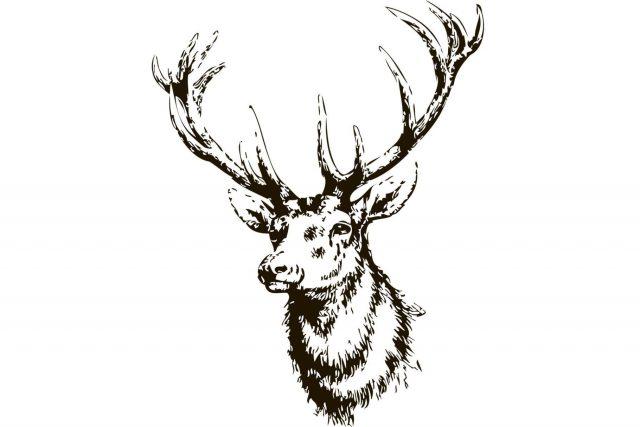 Elk head drawing 16
