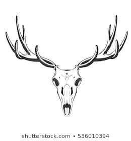 Elk line drawing 3