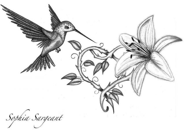 Hummingbird tattoo drawing 49