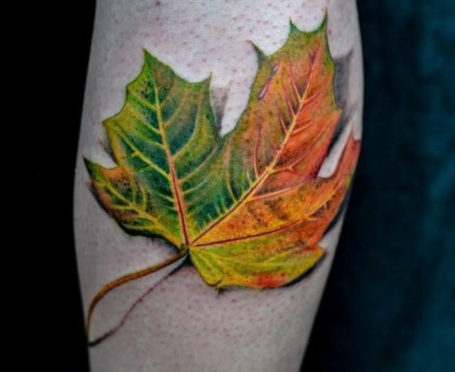 Maple leaf by winson