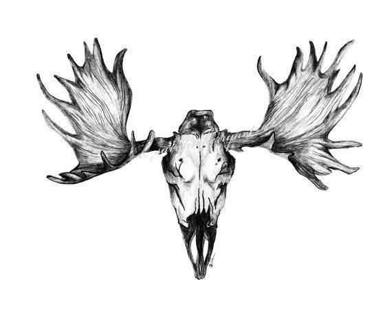 Moose skull drawing 25