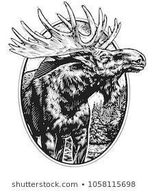 Scratch board illustration moose 260nw 1058115698