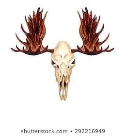 Watercolor moose skull isolated on 260nw 292216949